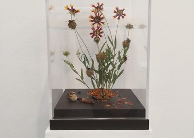 "Cynthia Mulcahy, BLU-82 aka ""Daisy Cutter"" bomb, U.S. Military, 1970-2008, from the War Garden series, 2018, Pressed and found flora, found insects, botany pins, floral clay, glue, paint, plexiglass box and wood base, 10 3/4h x 7 1/4w x 7 1/4d in"