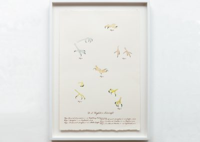 Cynthia Mulcahy, Birds of Prey (after J.J.) (from the War Garden series), 2017, Watercolor, pencil and walnut ink on Arches paper, 22 1/5h x 15w in