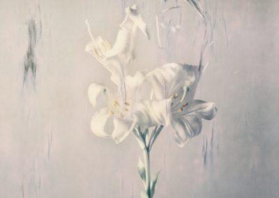 Ori Gersht, Lilium candidum P02, 2018, Archival pigment print, 31 1/2h x 23 5/8w in