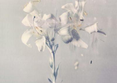 Ori Gersht, Lilium candidum P03, 2018, Archival pigment print, 31 1/2h x 23 5/8w in
