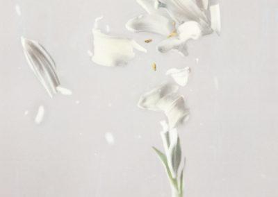 Ori Gersht, Lilium candidum P04, 2018, Archival pigment print 31 1/2h x 23 5/8w in