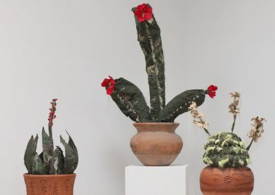 Margarita Cabrera, Saguaro, Echinocereus Dasyscan #3, Sabila -01