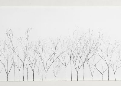 Linda Ridgway, In the Shadow of Trees, 2018, Graphite on paper, 30h x 66 3/4w in