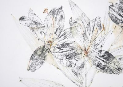 Linda Ridgway, Small Lilies Consider the Lilies a Study