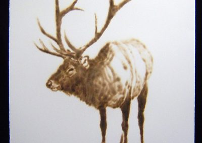 Helen Altman, Elk (2), 2013, torch drawing on paper, 30 x 22 1/2 inches