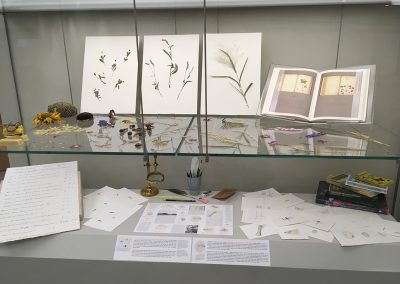Cynthia Mulcahy, Installation view, A Field Guide to Flora and Fauna of Southern Dallas, 2018-2019, Dallas Public Library