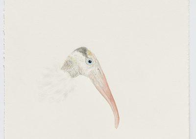 Cynthia Mulcahy, Wood Stork