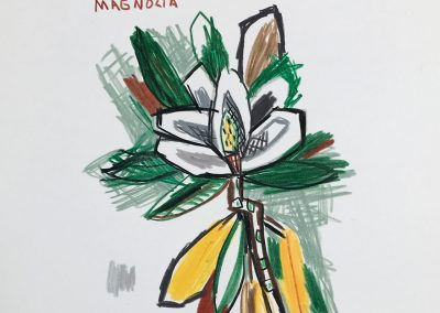 David Bates, Magnolia, 1999, Colored pencil on paper, 14h x 11w in