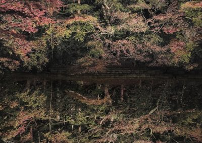 Ori Gersht, Floating Tree, 2016, Archival pigment print, 84 1/2h x 59w in