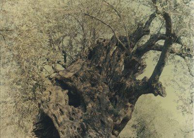 Ori Gersht, Ghost - Olive 17