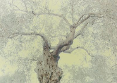 Ori Gersht, Ghost - Olive 18