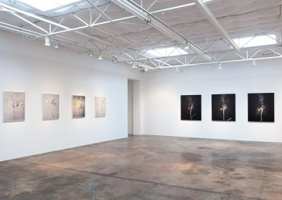 Ori Gersht, Installation view, New Orders, 2018-2019, Talley Dunn Gallery