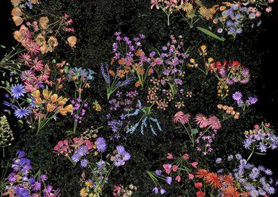Jennifer Steinkamp, Botanic 4, still frame 4, 2016, Archival pigment print, 38 1/2h x 21 1/2w in