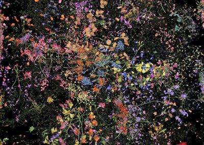 Jennifer Steinkamp, Botanic 4, Still Frame 12, 2016, Archival pigment print, 38 1/2h x 21 1/2w in