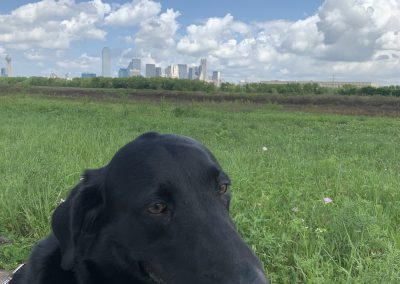 The Trinity Skyline Trail with gallery pup Missy.